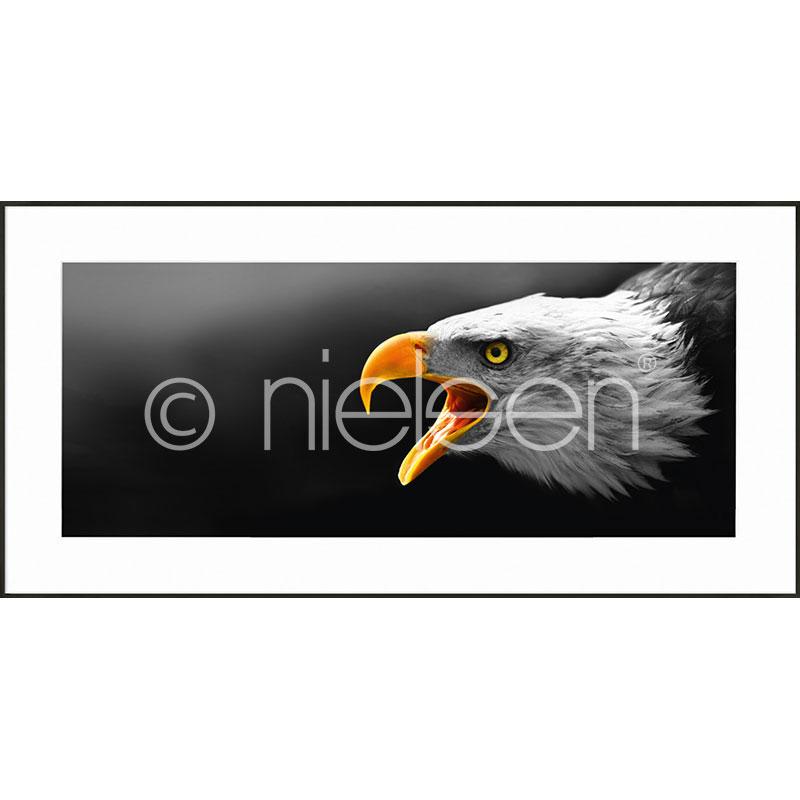 """Imagen con marco """"Eagle"""" con marco de alumino C2"""