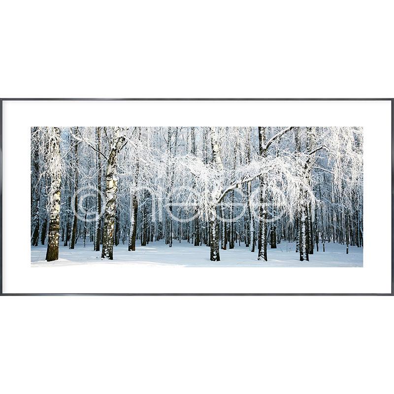 """Imagen con marco """"Birch Forest Snow"""" con marco de alumino Alpha"""