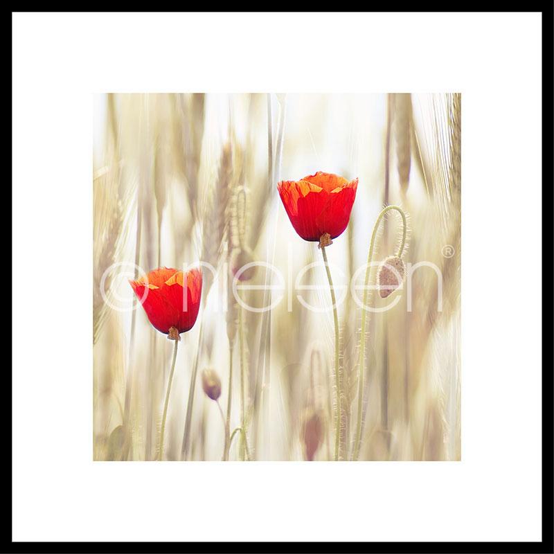 "Imagen con marco ""Flower Cornfield"" con marco de alumino C2"