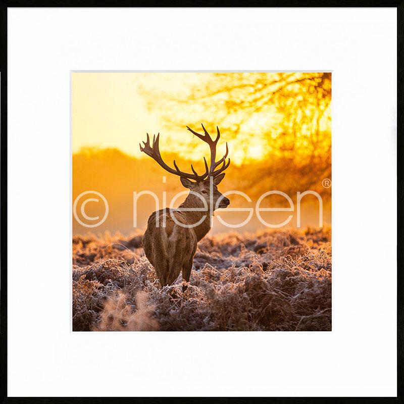 "Imagen con marco ""Cervine Sunset"" con marco de alumino C2"