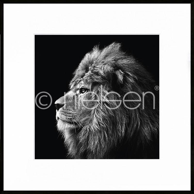 """Imagen con marco """"Lion black and white"""" con marco de alumino C2"""
