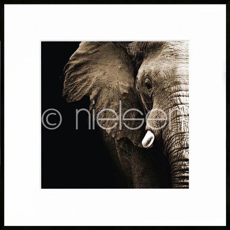 "Imagen con marco ""Elephant"" con marco de alumino C2"