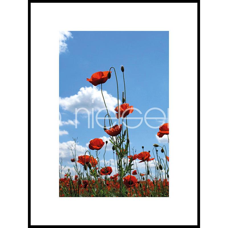 """Imagen con marco """"Field of Poppy Flowers"""" con marco de alumino C2"""