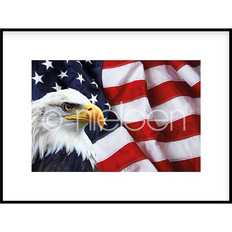 """Imagen con marco """"Eagle USA"""" con marco de alumino C2"""