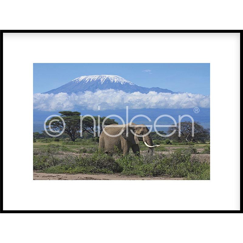 """Imagen con marco """"Elephant Prairie"""" con marco de alumino C2"""