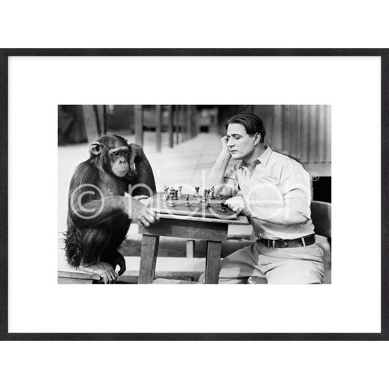 "Imagen con marco ""Monkey chess"" mit Marco de madera Quadrum"