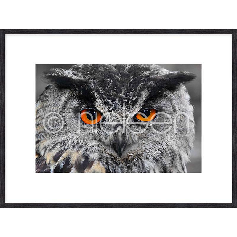 "Imagen con marco ""Owl"" mit Marco de madera Quadrum"