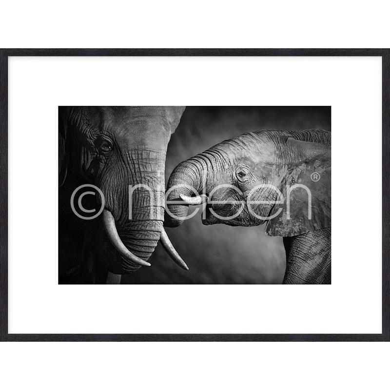 "Imagen con marco ""Elephant Baby"" mit Marco de madera Quadrum"