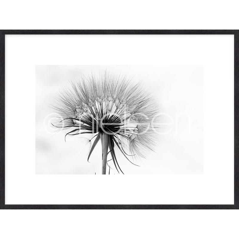 """Imagen con marco """"Dandelion abstract"""" mit Marco de madera Quadrum"""