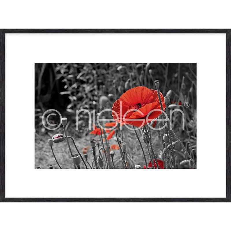"""Imagen con marco """"Red Poppy Flower"""" mit Marco de madera Quadrum"""