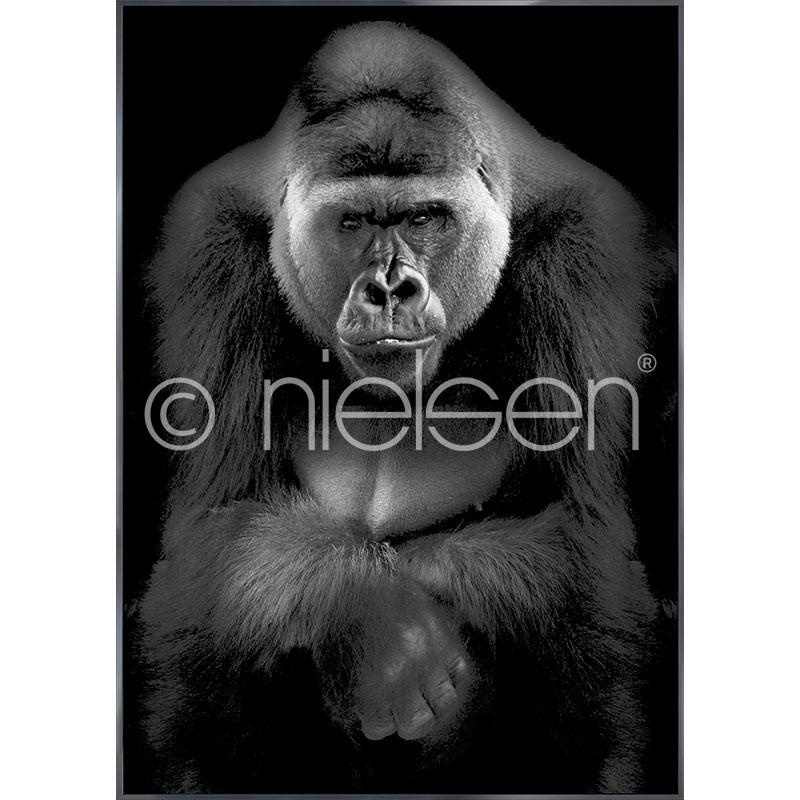 """Imagen con marco """"Gorilla"""" con marco de alumino Alpha"""