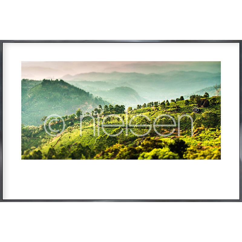 """Imagen con marco """"Landscape of Tea Plantations"""" con marco de alumino Alpha"""