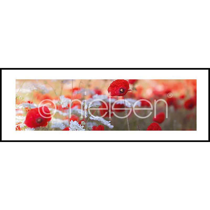 "Imagen con marco ""Poppy Flower"" con marco de alumino C2"