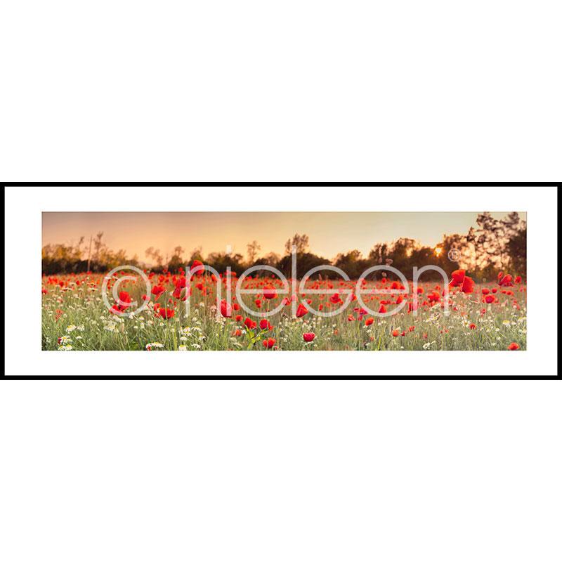 """Imagen con marco """"Poppy Flower Field"""" con marco de alumino C2"""